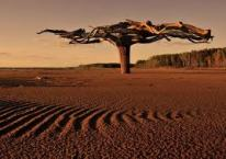 60 Цзя Цзы -  Дерево Ян на Лошади
